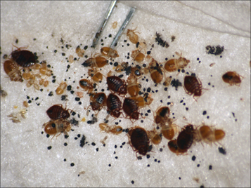 Are you seeing these signs of bedbugs?